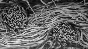 Las imágenes microscópicas revelan la ciencia y la belleza de las mascarillas faciales