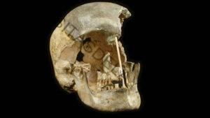Los humanos más antiguos de Europa se aparearon con los neandertales sorprendentemente a menudo