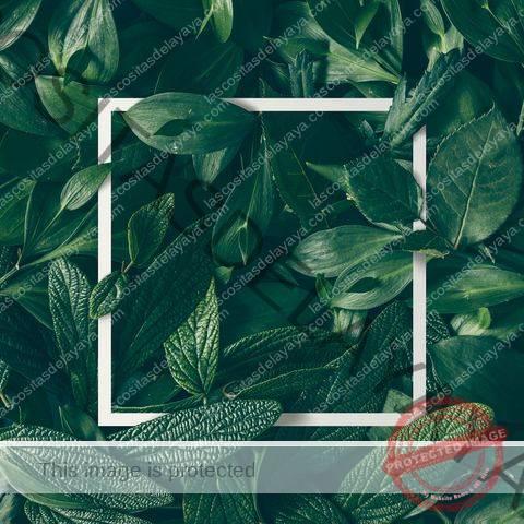 Diseño creativo de flores y hojas con nota de tarjeta de papel. Endecha plana. Concepto de naturaleza