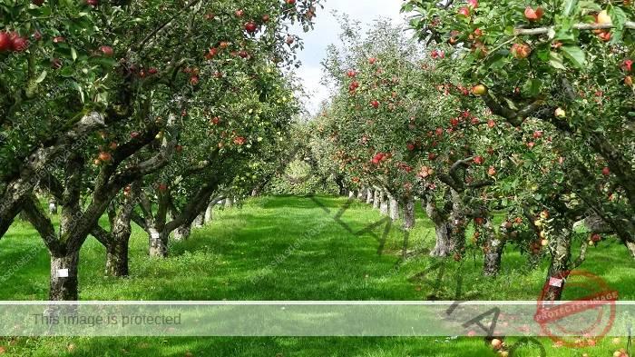 Campo de frutas
