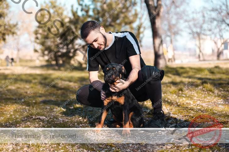 Cachorro de Rottweiler sentado con su dueño en el parque.