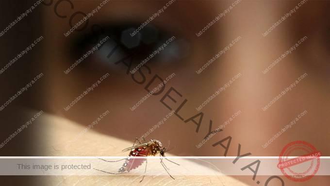 mosquito de la fiebre amarilla en la piel